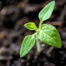 plant – 130